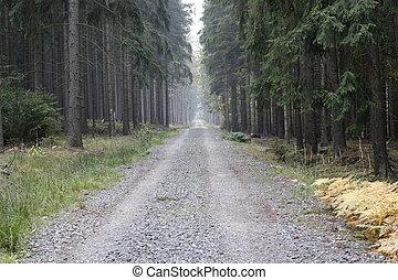 conifero, terreno boscoso, foresta, strada