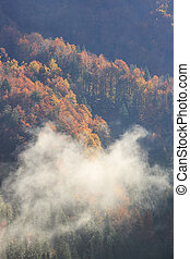 Coniferous and deciduous mountain forest in autumn colors, ...