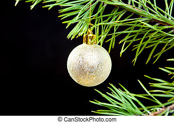 coniferous branch on dark background with toy cristmas