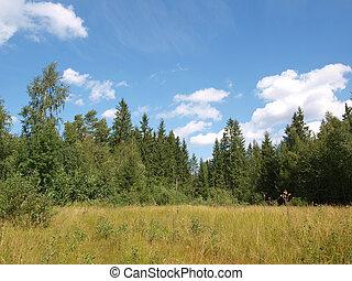 coniferous, floresta
