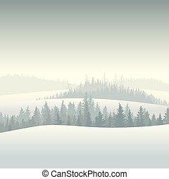 coniferous, floresta, morning.