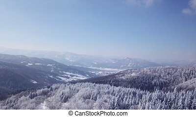 Coniferous forest. Aerial view - Winter coniferous forest...