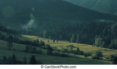 Coniferous forest and green grassland, Slovakia - Coniferous...