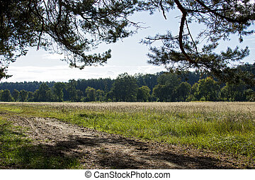 Coniferous forest and meadow under a blue sky with clouds in southern Moravia