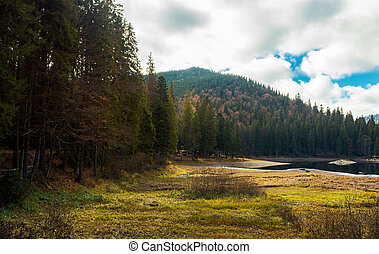 coniferous forest around the lake. beautiful landscape in...