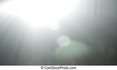 Coniferous Forest Backlit by the Fising Sun on a misty -...