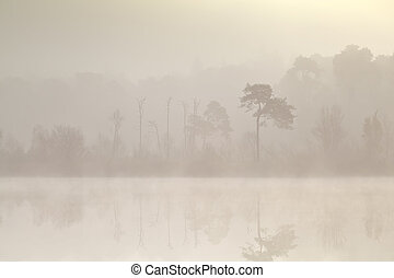 coniferous forest by lake in dense fog