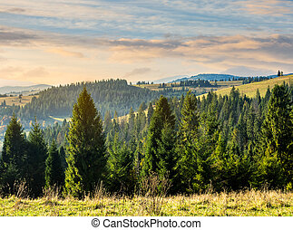 coniferous forest in mountains at sunrise