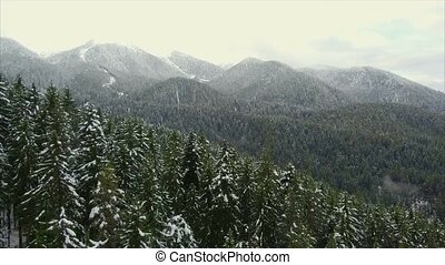 Coniferous forest in the mountains - Span over green...