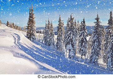 Coniferous forest in winter in mountains