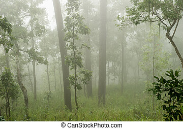 Coniferous forest on a misty autumn morning.