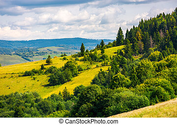 coniferous forest on a mountain slope. lovely autumn...