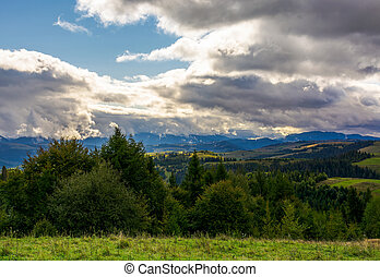 coniferous forest on a mountain slope - path in the grass on...