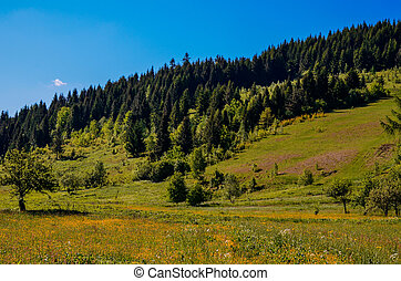 coniferous forest on the hillside at the foot of the mountain