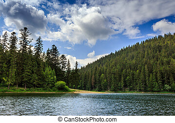 coniferous forest on the shore of a lake in mountains