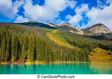 Coniferous forest on the shore of lake