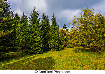 Coniferous forest - Travel to fantastic country of Croatia,...