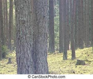 Coniferous forest trunk fragment.