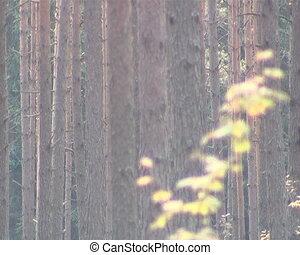 Coniferous forest trunk fragment. Sunlight penetrating...