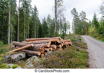 Coniferous forest with a timber stack by road side