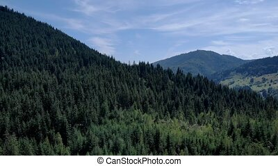 Coniferous forests landscape in Ukrainian Carpathians. A scene of forests and valleys in mountains. Panoramic alpine view.