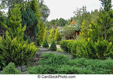 Coniferous garden with decorative arbor