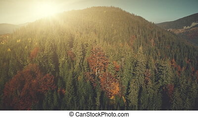 Coniferous highland sun beam sight aerial view - Coniferous...