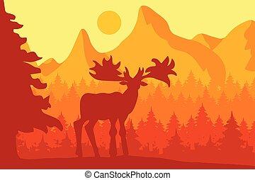 coniferous, manhã, floresta, alce