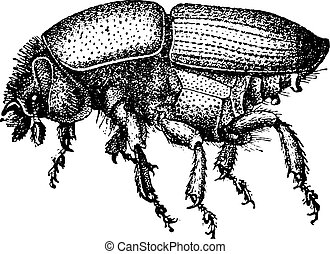 coniferous, moth, vindima, siberian, muito, inchados, seda, engraving.