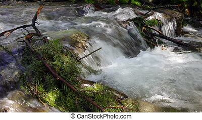 Coniferous tree branch in the fast mountain river.