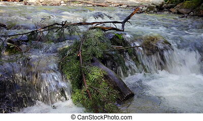 Coniferous tree branch in the fast mountain river. -...