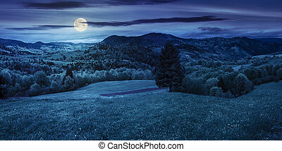 coniferous tree in a panoramic valley at night - panoramic...