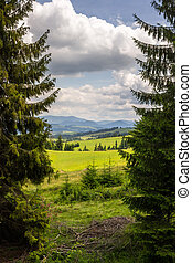 coniferous tree in a panoramic valley - hillside of mountain...