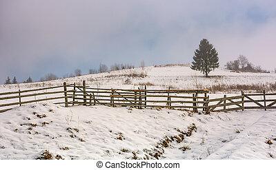 coniferous tree on snowy meadow in fog - coniferous tree...