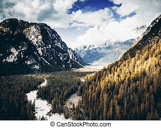 Coniferous trees in fall colors in high mountains
