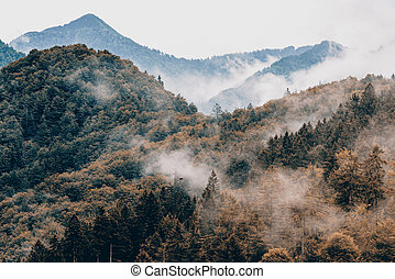 Coniferous trees in forest or woodlands at fall