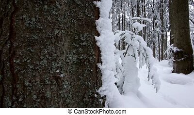 Coniferous winter forest, completely in the snow. Dolly...