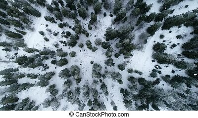 Coniferous winter forest view from above, Dense coniferous forest top, view aerial a winter pine forest of pines and firs, Aerial View of Pine trees in snow, Flight over winter mountain forest