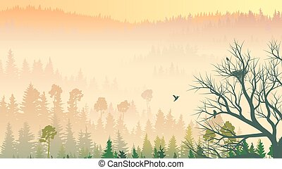 Coniferous wood in morning fog.