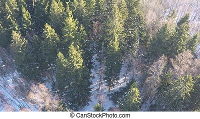 Conifers and birches in winter mixed forest, aerial view -...