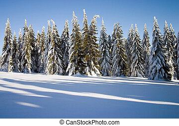 conifers, paisagem inverno