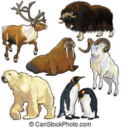 conjunto, animales, ártico