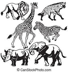 conjunto, animales, africano