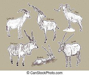 conjunto, animales, antílopes, bosquejo, dibujado, mano, ...