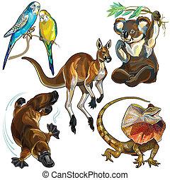 conjunto, animales, australiano
