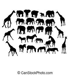 conjunto, animales, safari