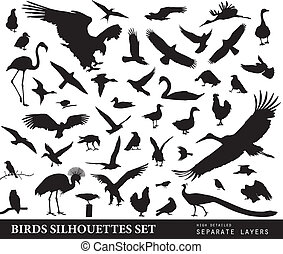 conjunto, aves
