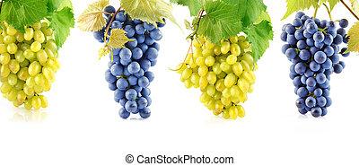 conjunto, azul, y, amarillo, uva, fruits, con, hojas