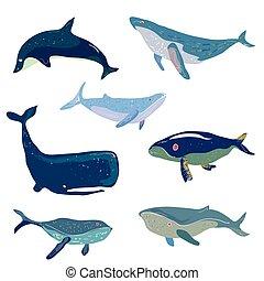 conjunto, ballenas, -, ilustración, mano, dibujado, diseño
