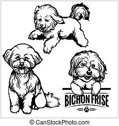 conjunto, bichon, -, perro, ilustración, aislado, vector,...